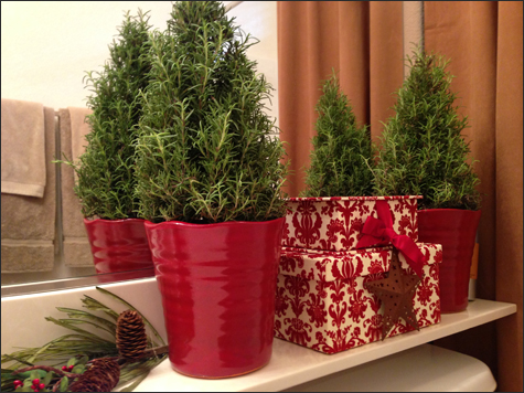 Rosemary Christmas Trees